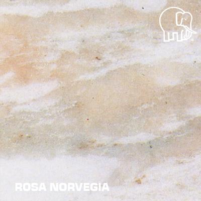 ROSA_NORVEGIA